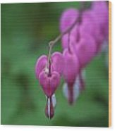 Bleeding Heart Parade Wood Print