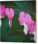 Bleeding Hearts 002 Wood Print