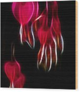 Bleeding Hearts 02 Wood Print