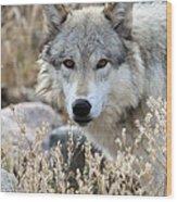Blending Wolf  Wood Print
