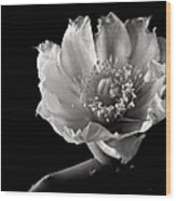 Blind Prickly Pear Cactus In Black And White Wood Print