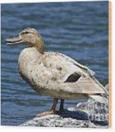 Blond Duck Wood Print