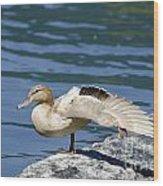 Blonde Duck Wood Print
