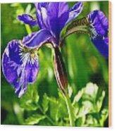 Blood Iris Wood Print