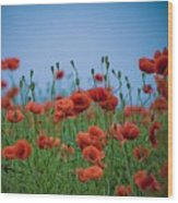 Blood Red Poppies On Vibrant Green And Blue Sky Wood Print by Edward Carlile Portraits
