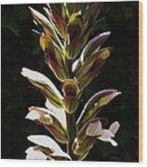 Bloom 1 Wood Print