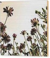 Blooming Above 2 Wood Print