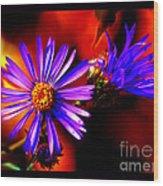 Blooming Asters Wood Print