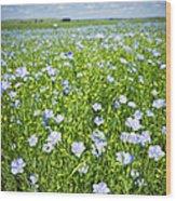 Blooming Flax Field Wood Print