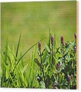 Blooming In Purple Wood Print