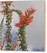 Blooming Ocotillo Wood Print