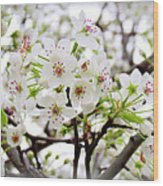 Blooming Ornamental Tree Wood Print