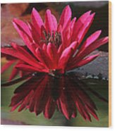 Blooming Red Lilly Wood Print