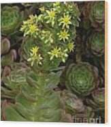 Blooming Succulents Wood Print