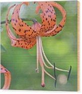 Blooming Tiger Wood Print
