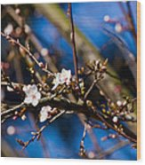 Blooming Tree With White Flowers Wood Print