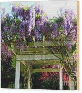 Blooming Wisteria  Wood Print
