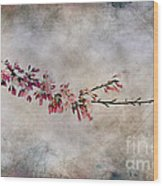 Blossom Branch Wood Print