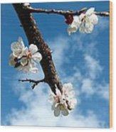Blossoming Apricot Wood Print