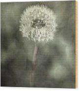 Blowball Wood Print