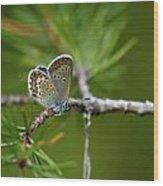 Blue 1 Wood Print