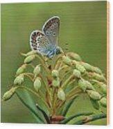 Blue 3 Wood Print