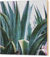 Blue Agave Wood Print