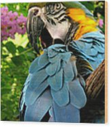 Blue And Gold Macaw Wood Print