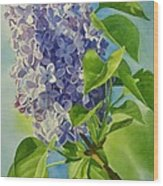 Blue And Lavender Lilacs Wood Print