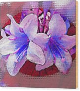 Blue And Red Weigela Window Wood Print