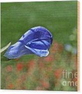 Blue Beacon Wood Print