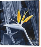 Blue Bird Of Paradise Wood Print