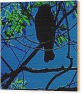 Blue-black-bird Wood Print by Todd Sherlock