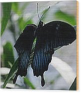 Blue-black Butterfly Wood Print
