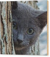 Russian Blue,cat  Wood Print