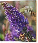 Blue Brush Bloom Wood Print