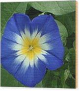 Blue Burst Wood Print