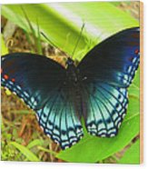 Blue Butterfly I Wood Print