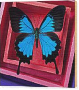 Blue Butterfly In Pink Box Wood Print