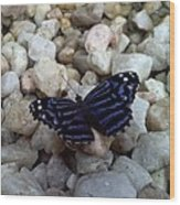 Blue Butterfly On The Rocks Wood Print
