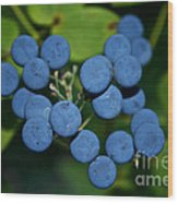 Blue Cohosh Wood Print