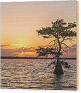 Blue Cypress Lake Sunrise Wood Print