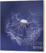 Blue Dandy Wood Print