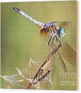 Blue Dasher On Twig Wood Print