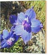 Blue Delphinium Flower Photograph Wood Print