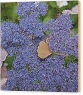 Blue Dot Wood Print