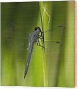 Blue Dragonfly 12 Wood Print