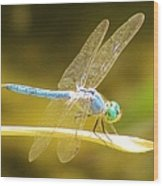 Blue Dragonfly Wood Print