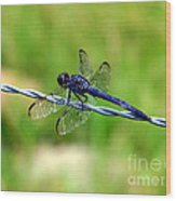 Blue Dragonfly On Barb Wire Wood Print