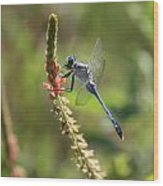 Blue Dragonfly On Pink Flower Wood Print